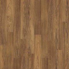 Canterbury 8 mm Laminate in Dijon