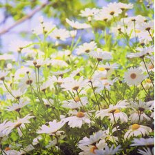 Graham and Brown Daisy Meadow Outdoor Photographic Print on Canvas