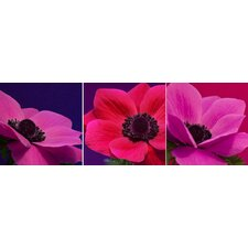 <strong>Graham & Brown</strong> Jewel Florals Canvas (Set of 3)