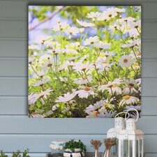 Daisy Meadow Outdoor Art