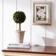 'Morning Magnolia' Framed Print