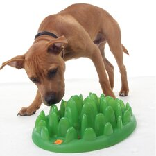 Slow Dog Feeder in Green