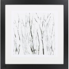 Birches I by Vision Studio Framed Graphic Art