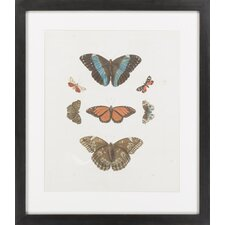 Knorr Butterflies IV by Vision Studio Framed Graphic Art