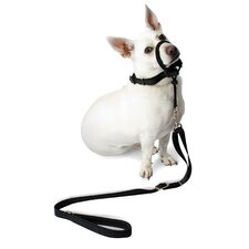 Dog Halter in Black