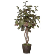 Katreil Tree in Pot