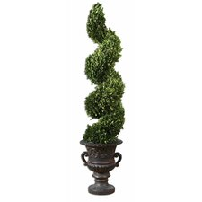 Spiral Preserved Boxwood Spiral Topiary in Urn