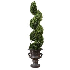 Preserved Boxwood Spiral Topiary Planter