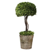 Preserved Ceramic Tree Topiary Planter