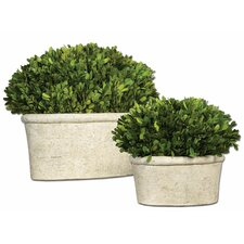 2 Piece Oval Domes Preserved Boxwood Plant Set in Planter