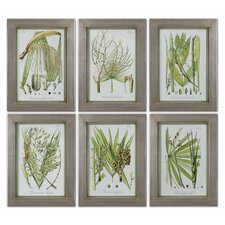 Palm Seeds by Grace Feyock 6 Piece Framed Painting Print Set