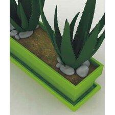 Jardinera Rectangular Plate
