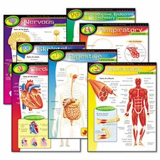 Human Body Learning chart Combo Pack, 7 Charts, 17 x 22