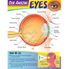 Learning Chart Our Amazing Eye