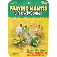 Mantis Life Cycle Stages