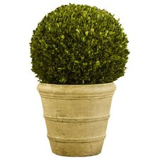 <strong>Napa Home and Garden</strong> Preserved Boxwoods Preserved Greens Ball Desk Top Plant in Pot