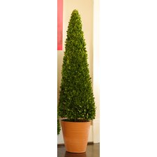 "Preserved Boxwoods 58"" Preserved Greens Cone Topiary"