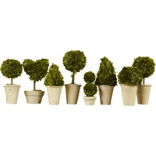 8 Piece Preserved Boxwoods Topiary in Pot