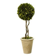 Preserved Boxwoods Ball Round Tapered Topiary in Pot
