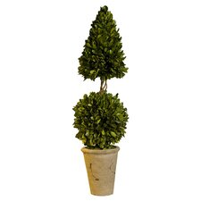 Preserved Boxwoods Cone Ball Round Tapered Topiary in Pot
