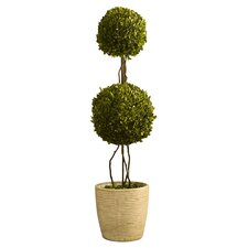 Preserved Boxwoods Double Sphere Topiary in Pot