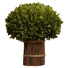 <strong>Napa Home and Garden</strong> Preserved Boxwoods Preserved Greens Willow Stand Desk Top Plant in Pot