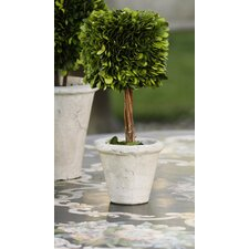 Preserved Boxwood Square Topiary in Pot (Set of 2)