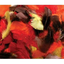 Assorted Quill Feathers Fall Color