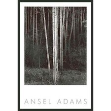 'Aspens' by Ansel Adams Framed Photographic Print