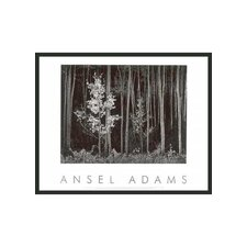 "Northern New Mexico Aspens Framed Print by Ansel Adams - 24"" x 30"""