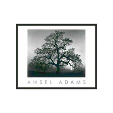 "Oak Tree Sunset Framed Print by Ansel Adams - 24"" x 30"""