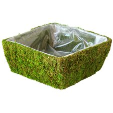 Square Santee Moss Basket (Set of 12)