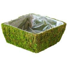 Square Santee Moss Basket