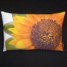 Helianthus Pillow