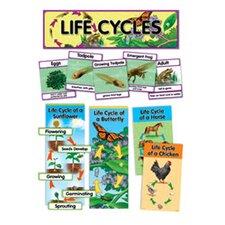 Life Cycles Mini Bb Set