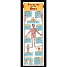 Systems Of The Body Colossal Poster