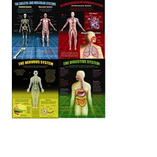 The Human Body Teaching Poster Set