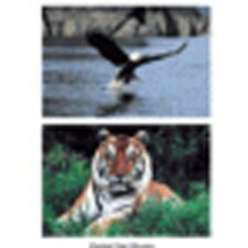 Wild Animal Poster Set (Set of 10)