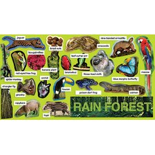 Rainforest Plants & Animals Mini Bb