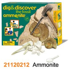 Dig and Discover Ammonite