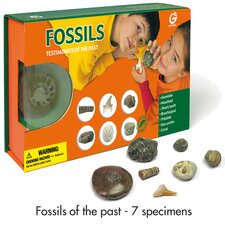 Fossils Testimonies of the Past