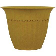 Decorative Biodegradable Bamboo Pot (Set of 6)