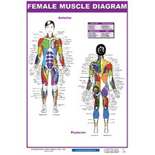 <strong>Productive Fitness Publishing</strong> Female Muscle Diagram Poster
