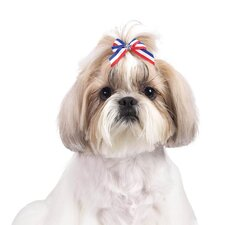 Stars and Stripes Dog Bows (Pack of 100)