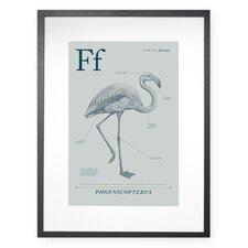Flamingo Framed Graphic Art