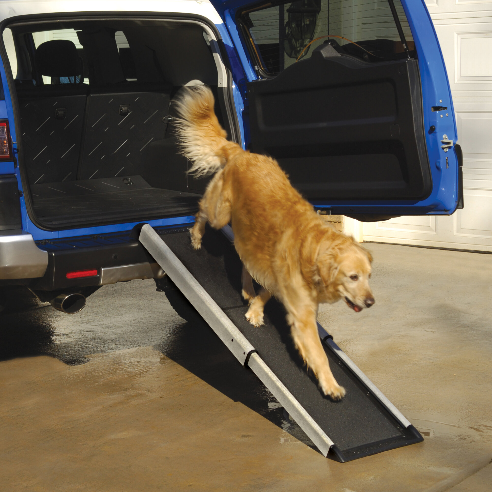 Dog on ramp for car