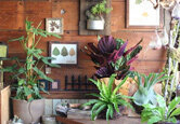 5 Mother's Day Plant Gift Ideas