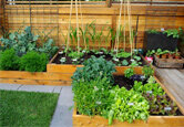 5 Tips for Planning Your Vegetable Garden