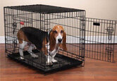 Dog Crate Buying Guide