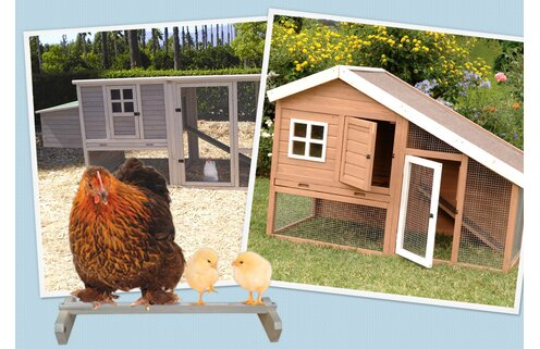 Get Clucky: Chicken Coops
